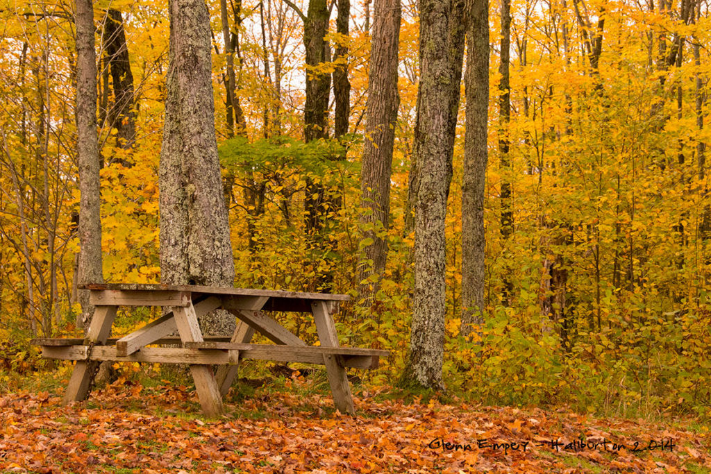 2014-10-Fall-Leaves-Haliburton1200x800-0018