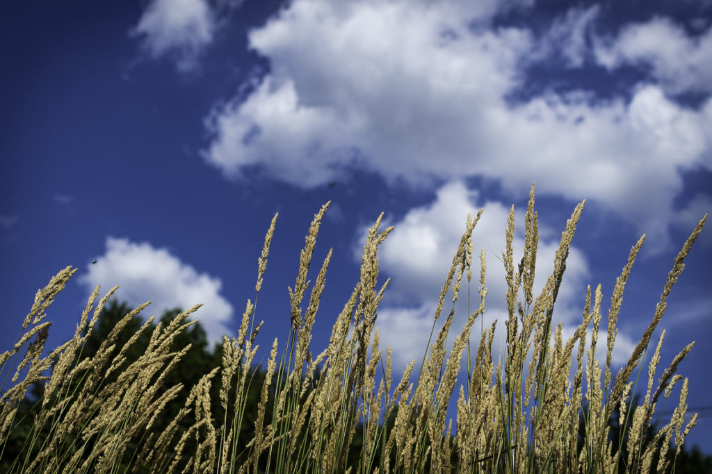 Long Grass and sky-0890