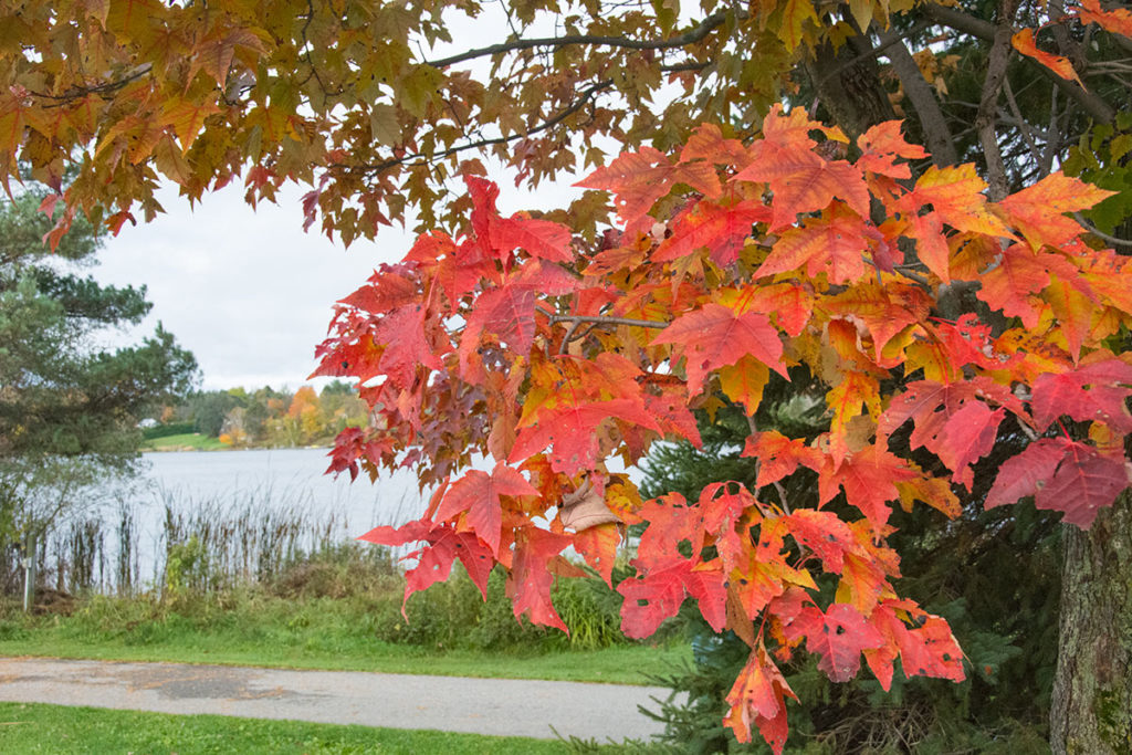 2014-10-Fall-Leaves-Haliburton-0029